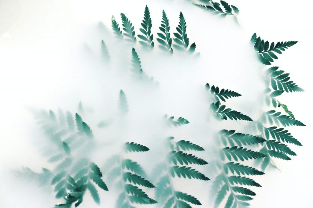 Green fern leaves surrounded by white smoke